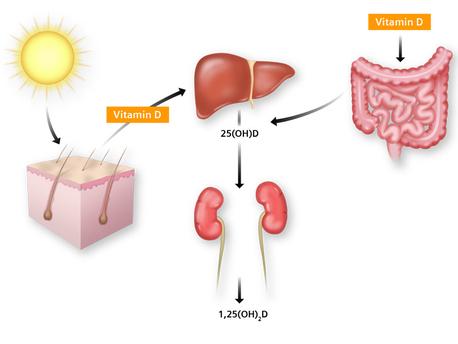 vitamind_sinteza