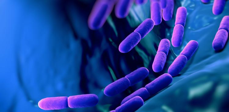 probiotske bakterije