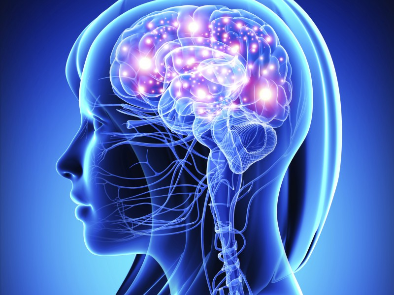 mozak-i-stomak